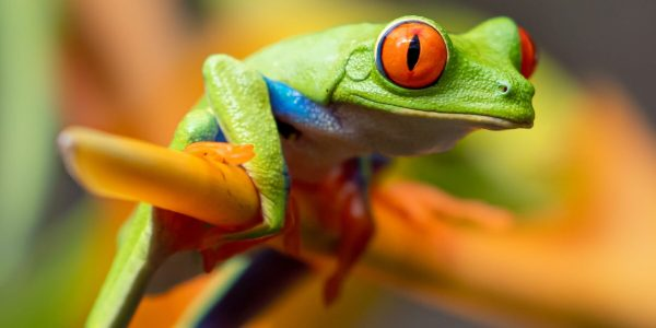 Screaming Frog voor beginners